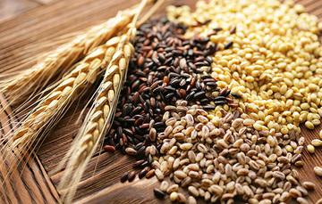 Granos básicos para la Seguridad Alimentaria