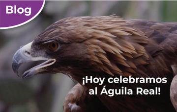 ¡Hoy celebramos al Águila Real!