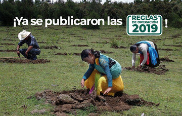 Mujeres y hombre reforestando un predio forestal.