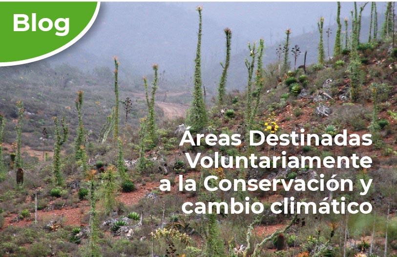 Portada de blog advc y cambio clim tico 1