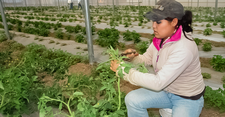 Mujer cortando tomate