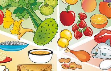 Alimentos, frutas, verduras y alimentos de origen animal.