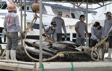 La medida contribuirá a mantener la producción sustentable del atún.