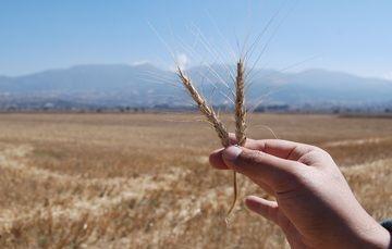 Programa Agromercados Sociales y Sustentables