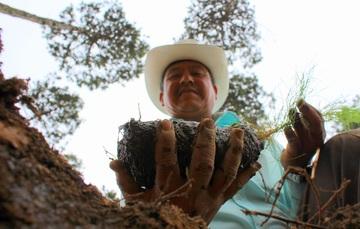 La CONAFOR impulsa actividades de reforestación, entre otras.