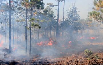 Las actividades humanas ocasionan el 99% de los incendios forestales.