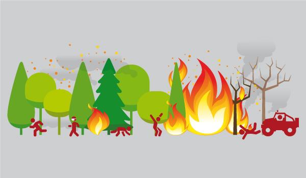 incendio árboles