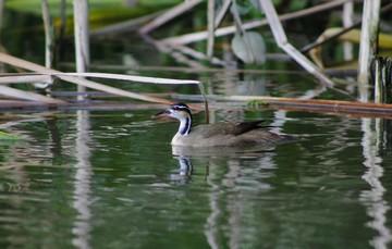 11 de mayo, Día Mundial de las Aves Migratorias