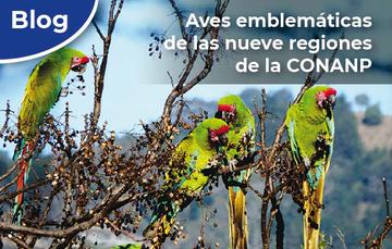 Aves emblemáticas