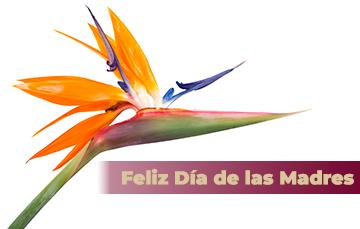 Celebra el Día de las Madres con una flor muy especial