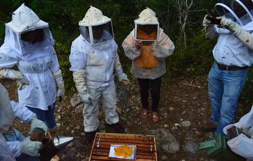 INIFAP idea suplemento alimenticio para abejas durante escasez de floración