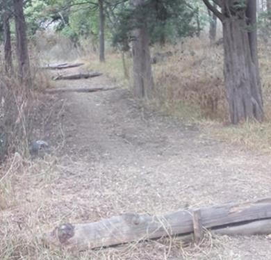 Obras para contener arrastres de suelo en lo alto de una cuenca