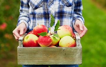 La importancia de las hortalizas