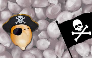 Semillas pirata
