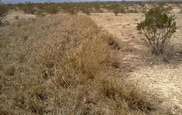 La contribución de la tecnología conserva áreas agrícolas