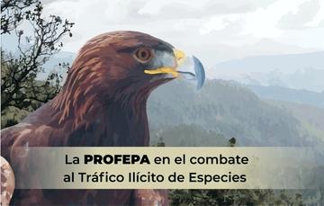 La PROFEPA en el combate al Tráfico Ilícito de Especies