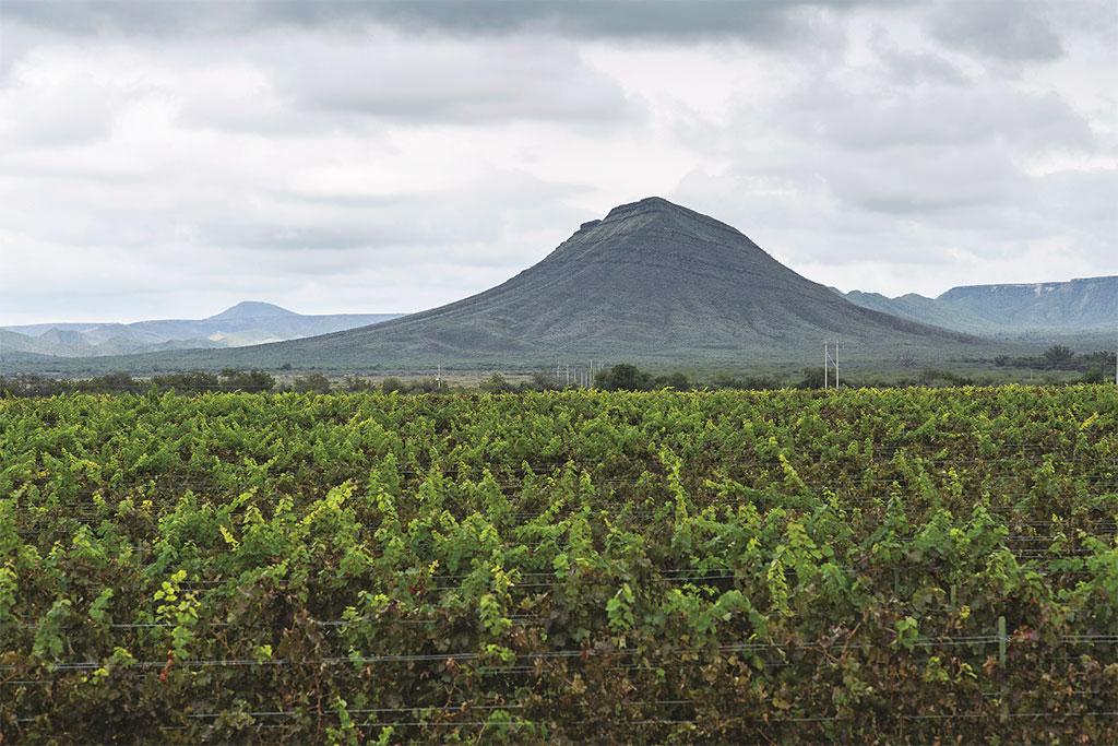 Vista panorámica de viñedo en Parras, Coahuila.