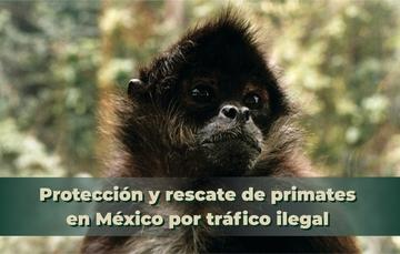 Tráfico ilegal de primates