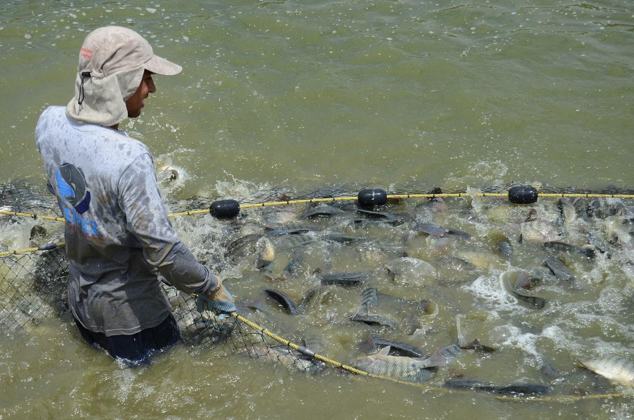 Al cierre de junio, la Conapesca recibió 124 mil 411 solicitudes del Programa de Fomento a la Productividad Pesquera y Acuícola, lo que representa 48 por ciento más de lo registrado en 2018.