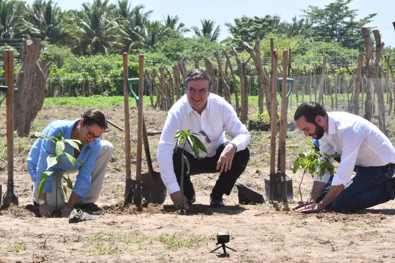 """Inician primeras acciones del Programa """"Sembrando Vida"""" en El Salvador"""