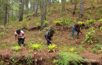 """Una vez al año, el pueblo zapoteca de Macuiltianguis, ubicado dentro de la Sierra Norte del estado de Oaxaca, realiza una actividad llamada """"Tequio"""" o trabajo no remunerado."""
