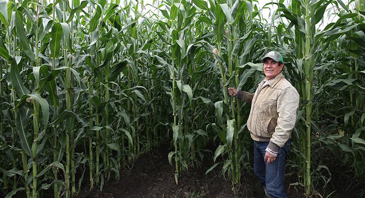 MasAgro esta orientado a elevar los rendimientos de los pequeños productores a través de prácticas sustentables.