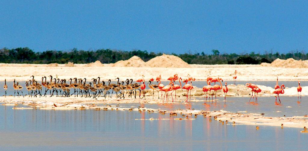 Reserva de la Biósfera Ría Lagartos, Valladolid, Yucatán