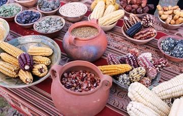 Descubre los diferentes colores del Maíz Mexicano.