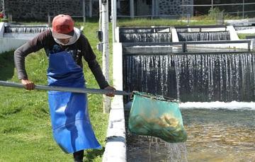 La Conapesca presentará a los productores del país la propuesta del Plan Nacional de Acuacultura Sustentable 2019-2024.