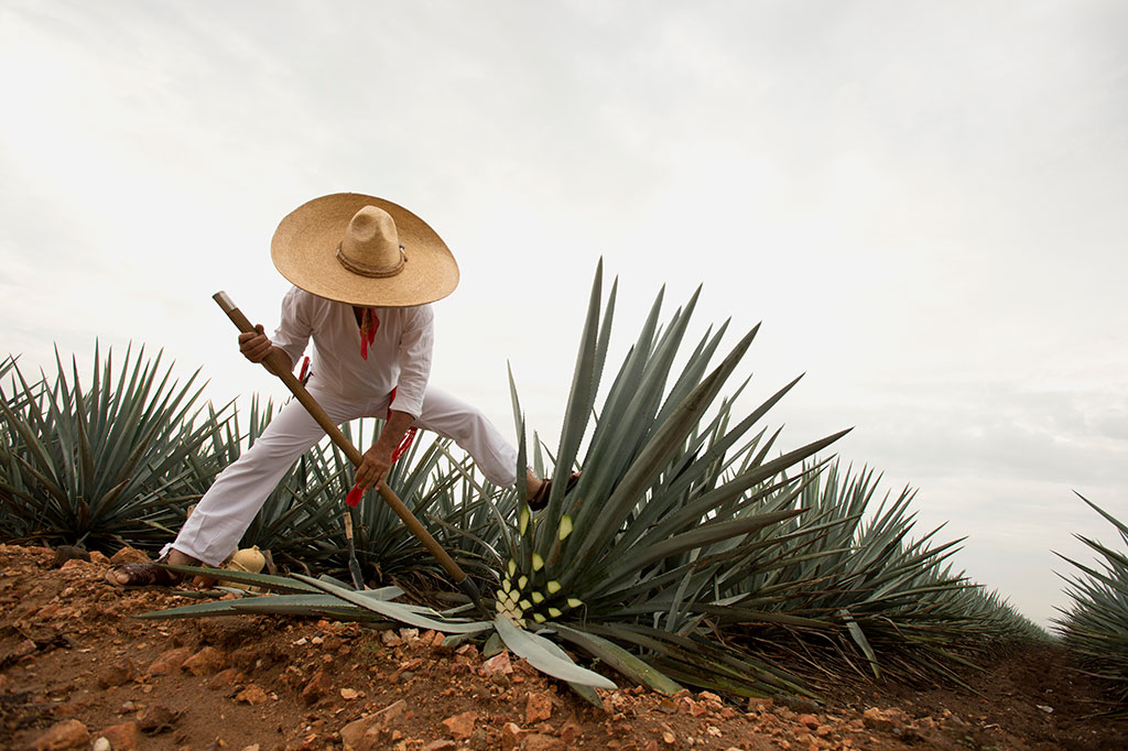 Jimador Tequila Jalisco