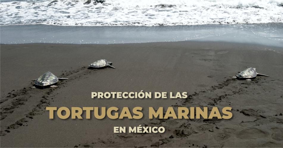 Protección de las tortugas marinas en México