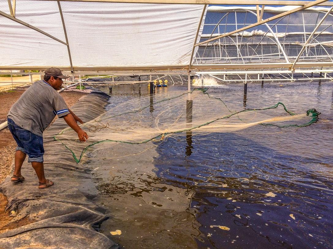 El organismo internacional destaca que México reconoce e impulsa que la política pública pesquera y acuícola, así como su mejora continua, se debe basar en instrumentos como el Código de Conducta para la Pesca Responsable.