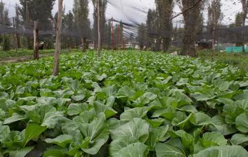 A diferencia de la agroindustrialización, prácticas agroecológicas como la chinampa protegen la biodiversidad y los suelos y aportan alimentos necesarios para la sociedad.