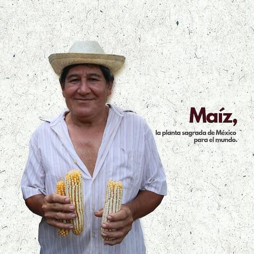 Maíz, la planta sagrada de México para el mundo