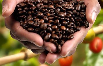 En Xicotepec se toma café, Xicotepec de Juárez, Puebla.