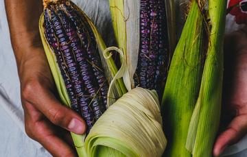 En nuestro país existen 64 razas de maíz, las cuales nos brindan una gama de colores que incluye tonalidades rojas, negras y azules, pero la mayor producción corresponde a maíces blancos y amarillos.