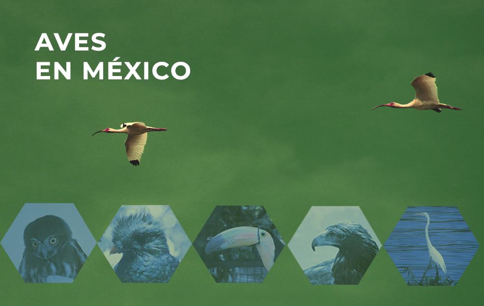 La Relevancia de las aves en México