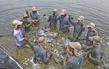 Se galardonarán trabajos en cinco áreas del sector: Acuacultura Rural, Acuacultura Comercial e Industrial, Pesca Comercial de Pequeña Escala, Pesca Comercial de Gran Escala e Investigación Pesquera y Acuícola.