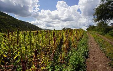 Ante los efectos del cambio climático, la agroecología es capaz de reducir los múltiples factores estresantes que inciden en su agravamiento, así como de recuperar la soberanía alimentaria.