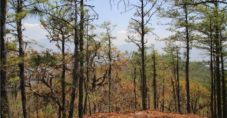 San Pablo Macuiltianguis forma parte de la Sierra Norte del estado de Oaxaca