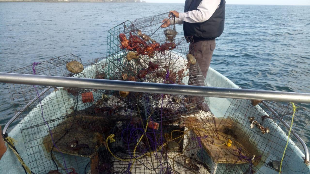 La Conapesca, a través de la Dirección General de Inspección y Vigilancia, realiza acciones en el país para erradicar la pesca furtiva y las malas prácticas que se usan en algunas zonas para la extracción de distintas especies.