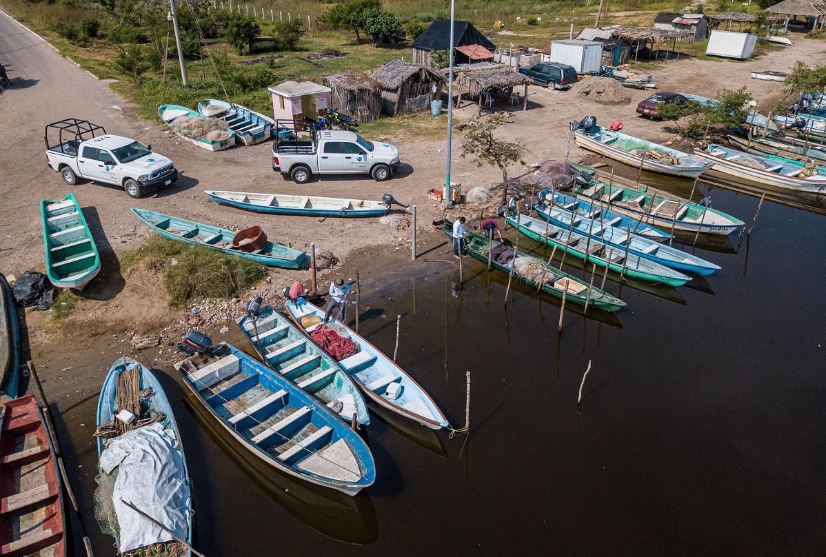 Con el objetivo de evitar el consumo de pescado en ambas zonas, la Dirección General de Inspección y Vigilancia de la Conapesca activó un operativo para evitar el saqueo y comercialización de producto.