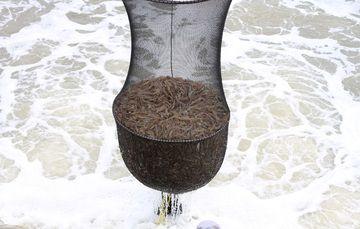 El Sistema Informático de Trazabilidad de Mercancías Agropecuarias, Acuícolas y Pesqueras (SITMA) captará información de estudios realizados por la Conapesca, el Senasica y productores de camarón de acuacultura en todo el país.