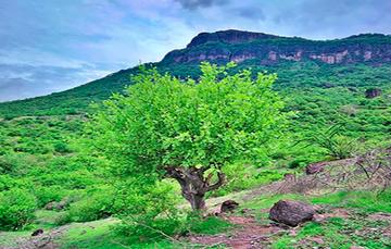 El copalli o copal  se utiliza en México desde la época prehispánica, pero es necesario impulsar el desarrollo sostenible de las regiones copaleras.
