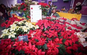 La flor de Nochebuena o cuetlaxóchitl, domesticada por la antigua población mexicana, es ícono mundial de fiestas navideñas.