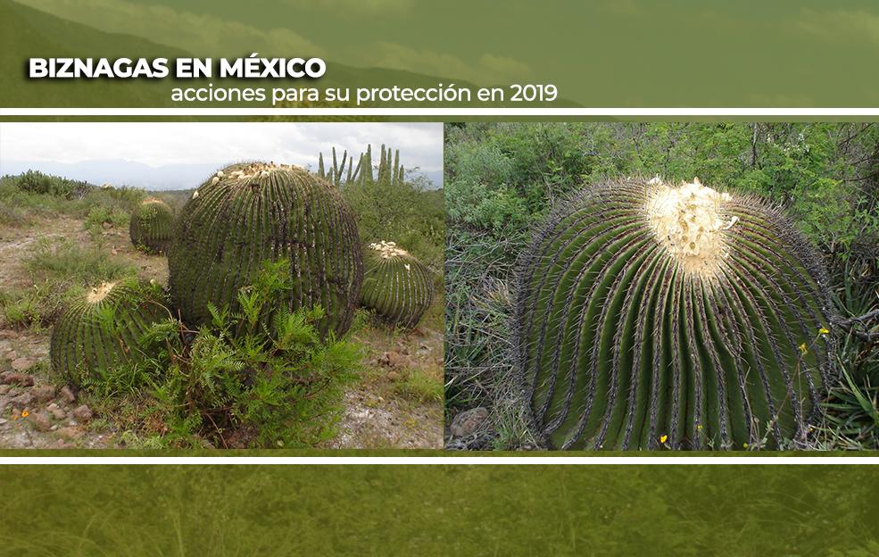 Acciones y Resultados de Protección a biznagas en 2019