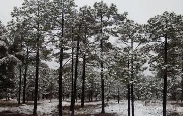las bajas temperaturas ocurren esencialmente durante los meses de noviembre a marzo, siendo diciembre y enero los de mayor impacto