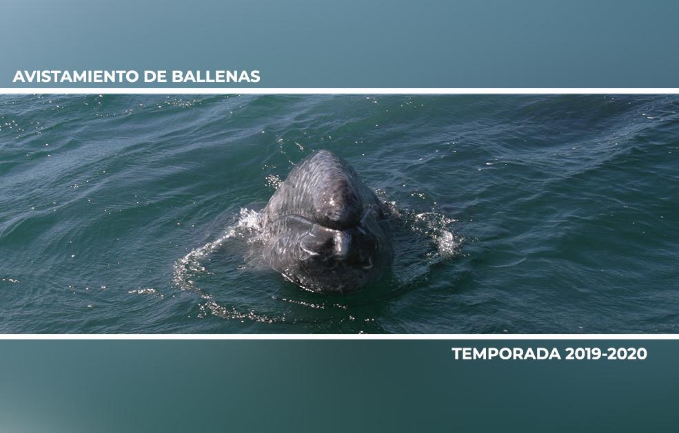 Actividades de Observación de Ballenas Temporada 2019- 2020