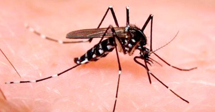 ¿Qué es el virus zika?
