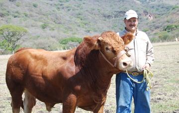 Ganadero con una vaca